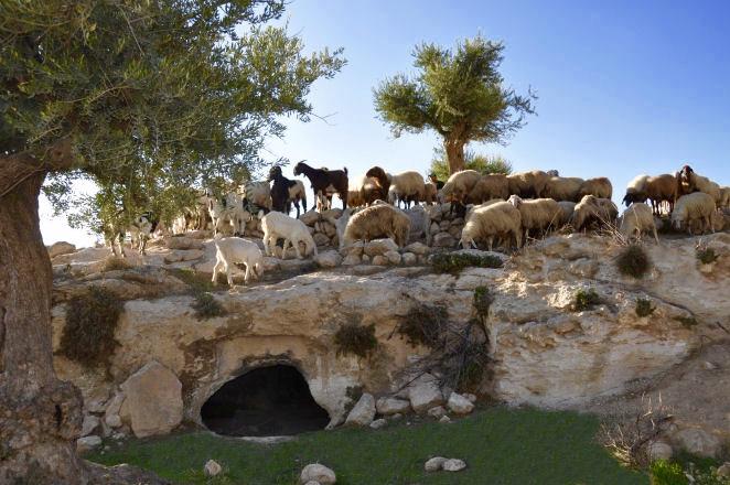 champ des bergers jésus naissance Bethléem terre sainte