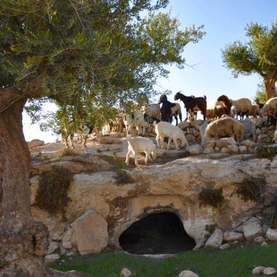 Champ des Bergers Noël Bethleem Israël Terre Sainte pèlerinage groupe voyage
